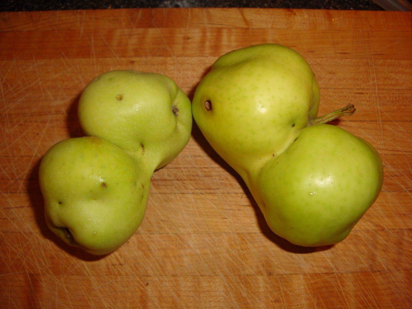 Apple harvest craziness