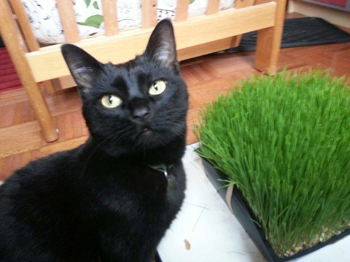 Growing wheat grass for your cat: an illustrated tutorial
