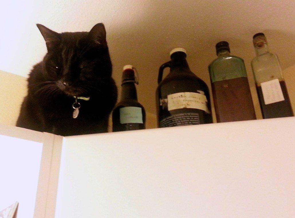 Guardian of the Homemade Vinegars