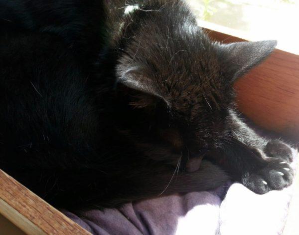 Lilo sleeping in a drawer on a windowsill