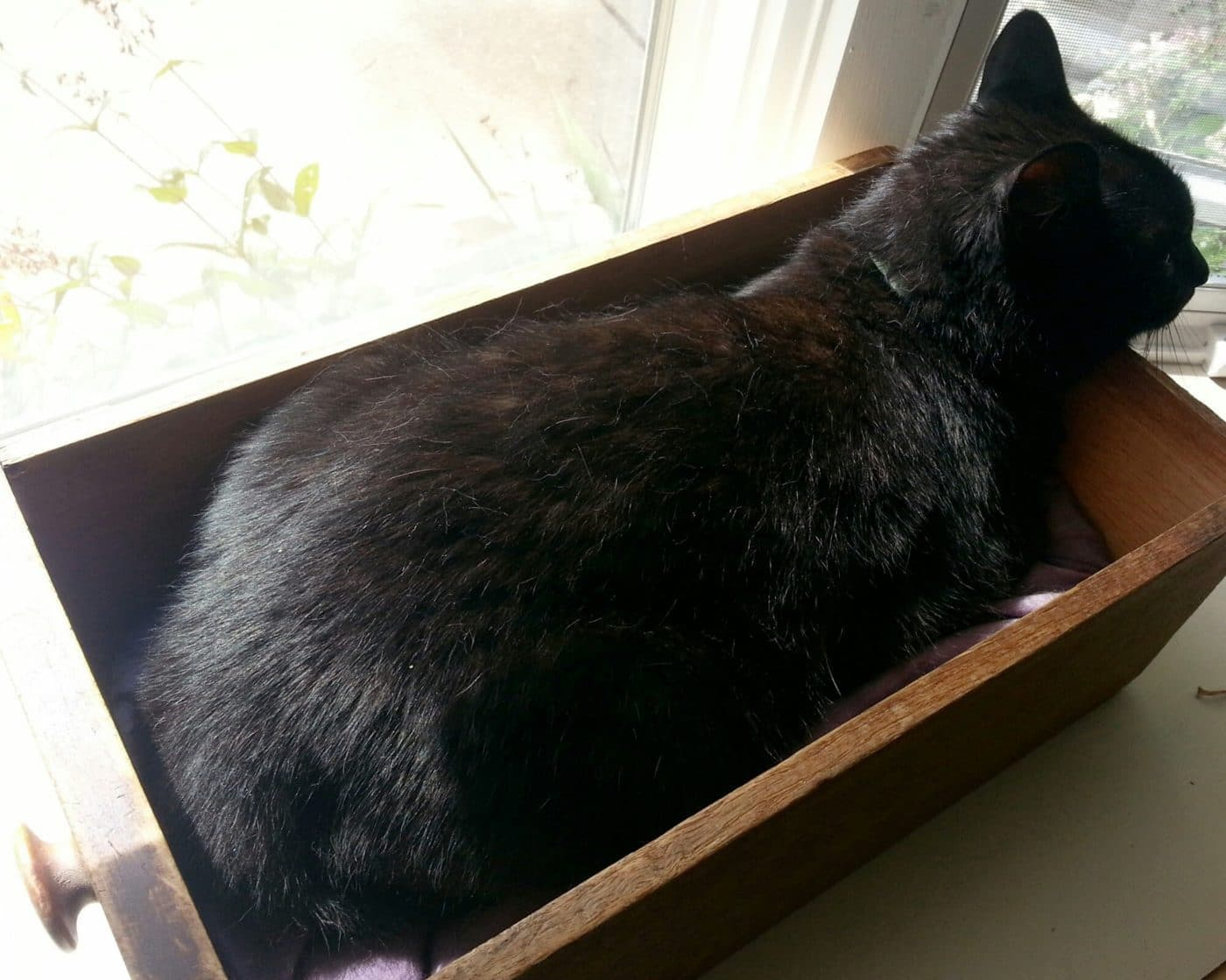 The best cat beds are free