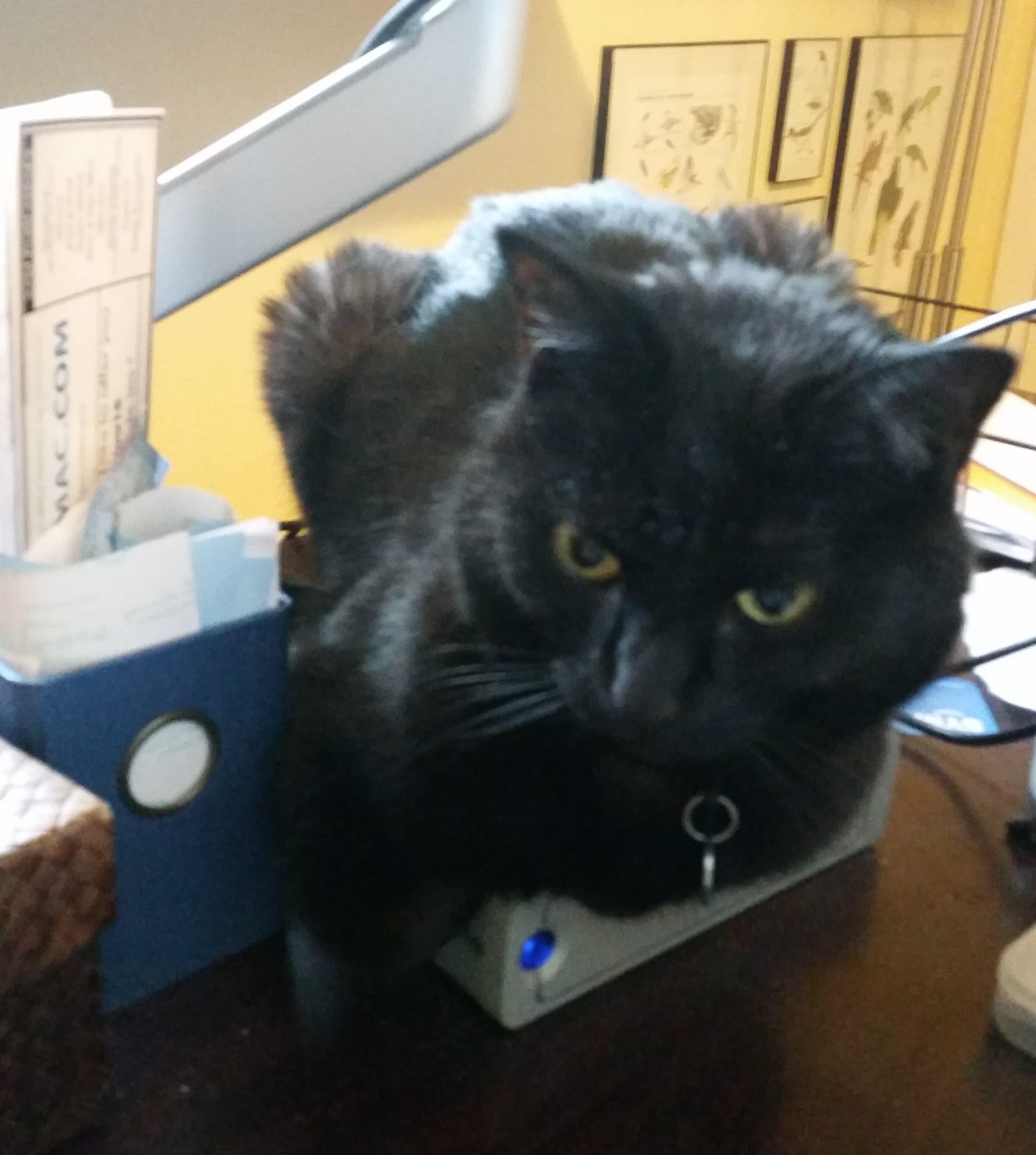 Cats and computer drives
