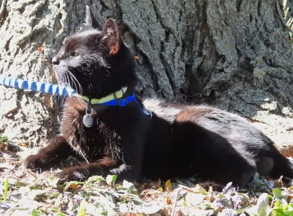 Lilo the black cat sitting at the base of a tree, surveying her kingdom